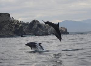 Baja - delfines